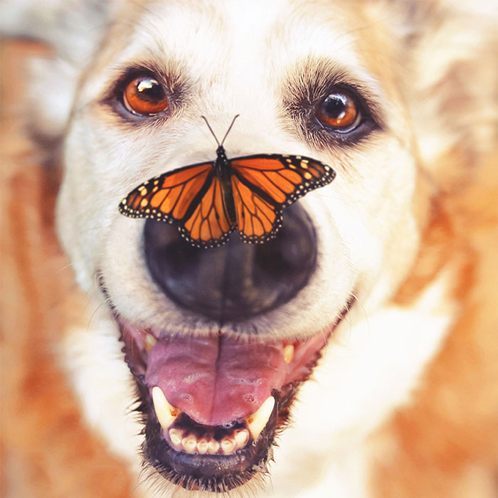 I Photograph Senior Dogs To Preserve Their Memories In Honor Of My Own Dogs That Passed Away (30 Pics)