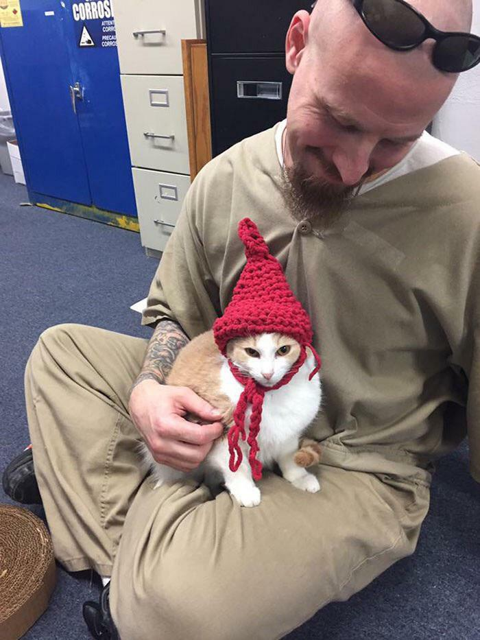 Prisoners From Indiana Were Given Cats To Look After As Part Of A Rehabilitation Scheme. Here Is One Prisoner With A Hat He Knitted For His Cat!