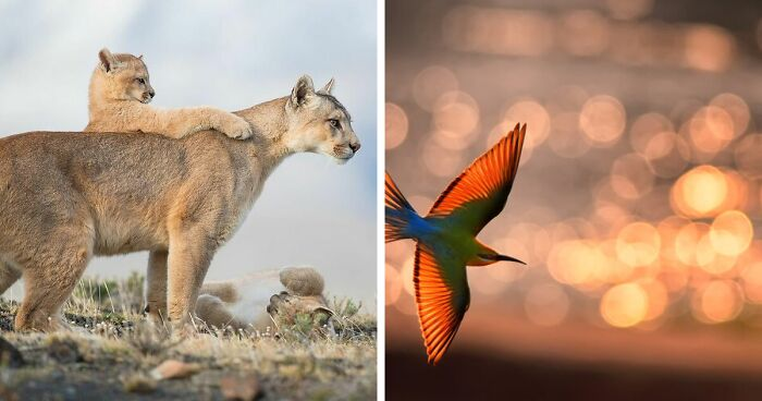 The Best 28 Wildlife Photos Revealed In The 2021 WildArt Photographer Of The Year Contest