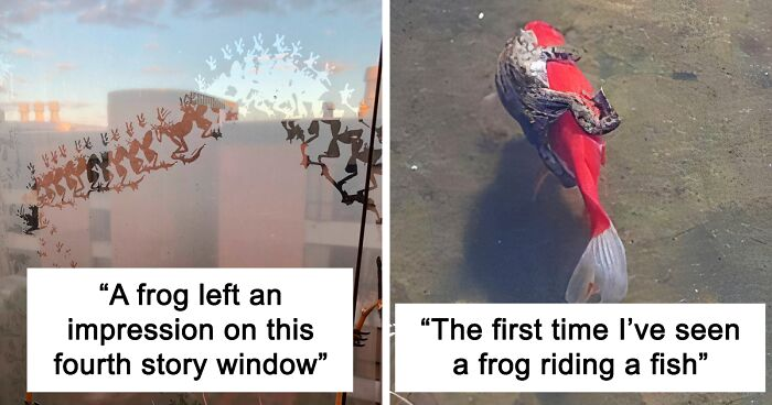 95 Adorable And Funny Frog Pics To Make Your Day Better