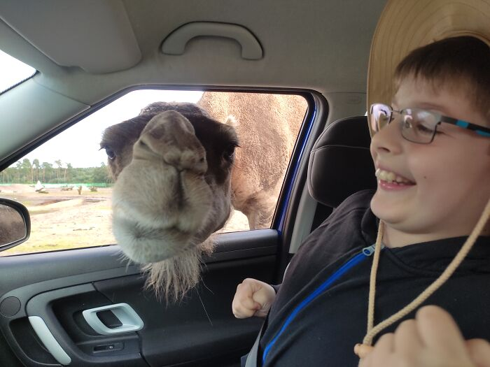 Even Camels Can Smile Crookedly