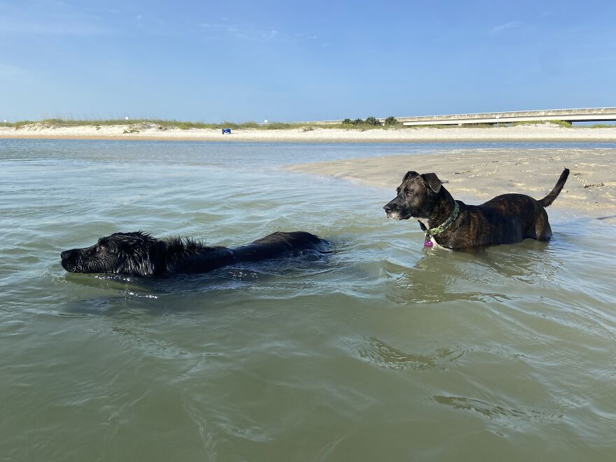 Garnet And Ginnie Enjoying The Water Together