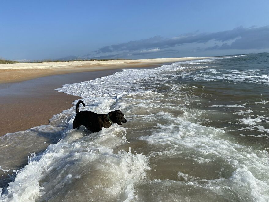 Ginnie Attempting To Catch The Waves
