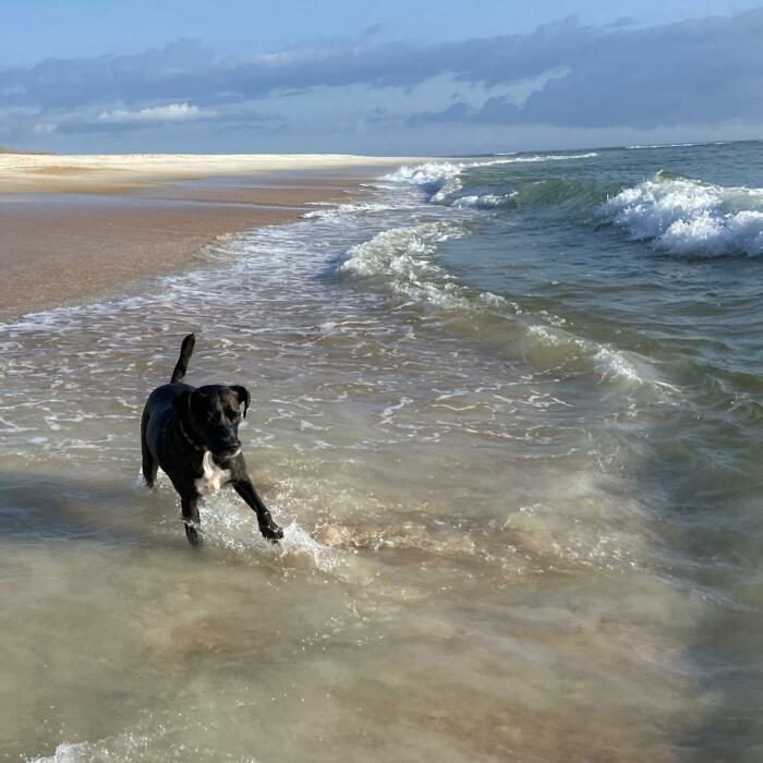 I Gave Two Rescues A Well Deserved Beach Day (39 Pics)