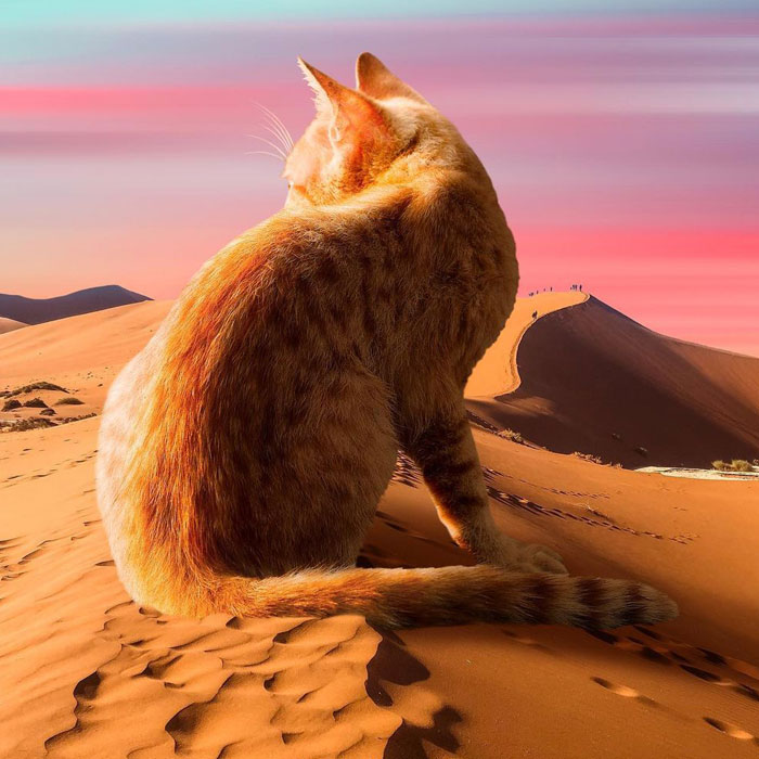 91 Surreal Photo Edits With Giant Cats By Matt McCarthy (New Pics)