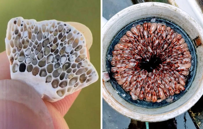 People Are Sharing Their Unexpected Trypophobia Moments, And Here Are 30 Pics That Creeped Them Out